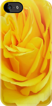 Yellow Rose (Friendship) by taiche