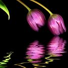 Tulip Reflections l by TheWalkerTouch