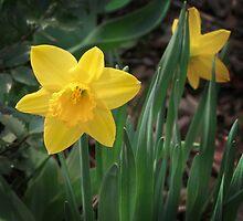 Spring Gold by Nadya Johnson