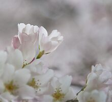 The Glory of Spring 3 by Peter O'Hara