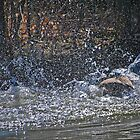 Splashing  About by Dlouise