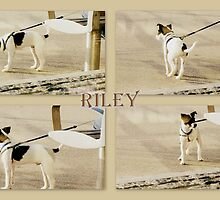 Riley by ©The Creative Minds