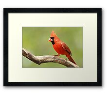 My favorite Cardinal Framed Print
