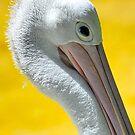 Pelikan by KoosG