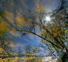 Creek Reflections by Cora Wandel