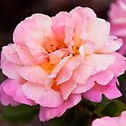 Raindrops on Roses by Michelle  Wrighton