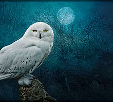 Night Owl by Tarrby