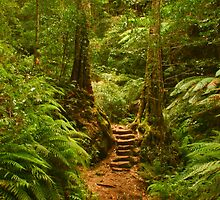 Rainforest pathway by Michael Matthews