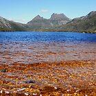 Blue and Gold, Dove Lake, Cradle Mountain,Tasmania, Australia. by kaysharp