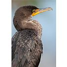 Double-Crested Cormorant #1 by Rick & Deb Larson
