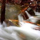 Rapids on Salt Creek #3 by aussiedi