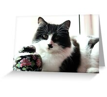 Morrisey the cat 2 Greeting Card