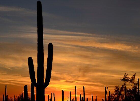 Sundown Tucson 2 by Judy Grant