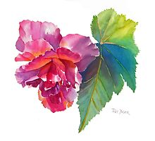 Begonia Watercolor by Pat Yager