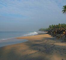 Palm Tree over Black Beach Varkala by SerenaB