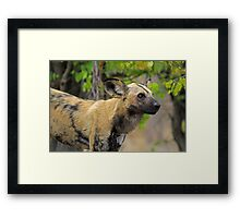 Taking a breather Framed Print