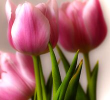 Pink Tulips by Ljartdesigns