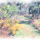 A Walk in the Painted Preserve by Rosalie Scanlon
