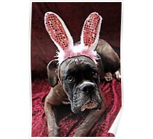 Boxer With *Wabbit* Ears Poster