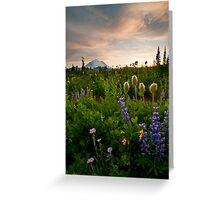 Lupine Sunset Greeting Card