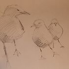 Three Gulls by Kayla001