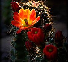 Hedgehog Cactus  by Saija  Lehtonen