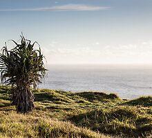 A Lone Pandanus - Skennar's Head by Daniel Rankmore