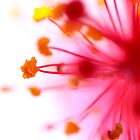 Naked Sunday Photography - Macro World Calendar by David Snailham