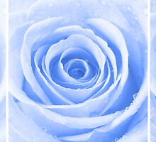 Blue Rose with Water Droplets Triptych by Natalie Kinnear