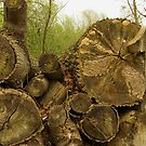 Tree trunks and bracket fungi by steppeland
