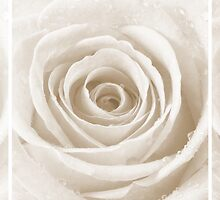 Sepia Rose with Water Droplets Triptych by Natalie Kinnear
