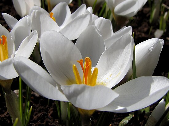 Spring blooms by Irina777