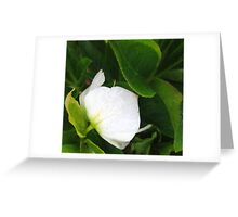 in the raine white Greeting Card
