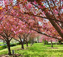 Spring blossoms in New York City by Alberto  DeJesus