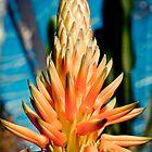 Spring Colour by samsphotos12