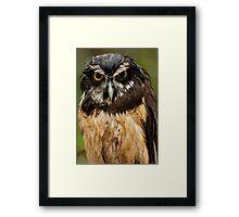 Angry Owl Framed Print