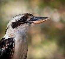 Kookaburra portrait by Celeste Mookherjee