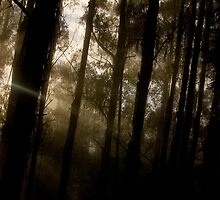 Toolangi Sunrise Panorama by Daniel Berends