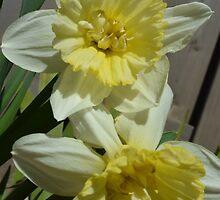 FF: daffodils by Tamgail