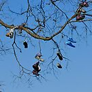Shoe Tree - High and Dry by jules572