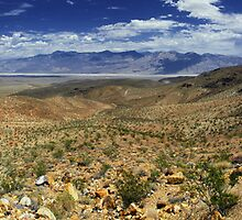 Mojave Magic by Natalie Ord