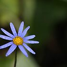 Wet Blue Daisy by Jackson  McCarthy