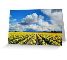 Blanket of Sunshine - Daffodil Fields 1 Greeting Card