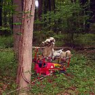 Hobby Horse in an Unlikely Place (VINTAGE 1950s WONDER ROCKING HORSE) by Jane Neill-Hancock