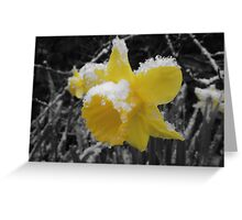 Daffodils in snow Greeting Card