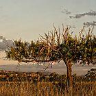 Old Tree by Julia Ott