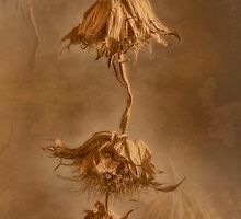 Finale in Gold by Dianne English