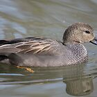 Drifting Gadwall  by Richard Durrant