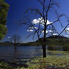 Maroon Dam Queensland by Noel Elliot