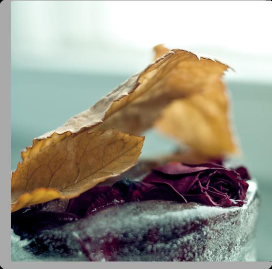 Frozen Withered Rose by Bjarte Edvardsen